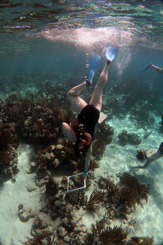 Tobacco Caye Marine Station Belize Coral Classroom
