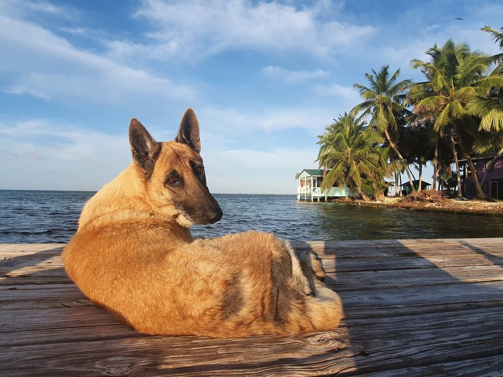 Tobacco Caye Marine Station Delilah on Watch