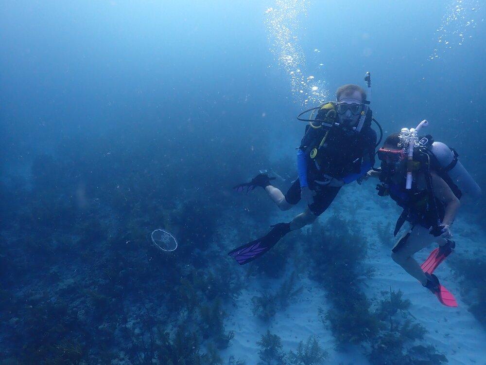 Tobacco Caye Marine Station Diving