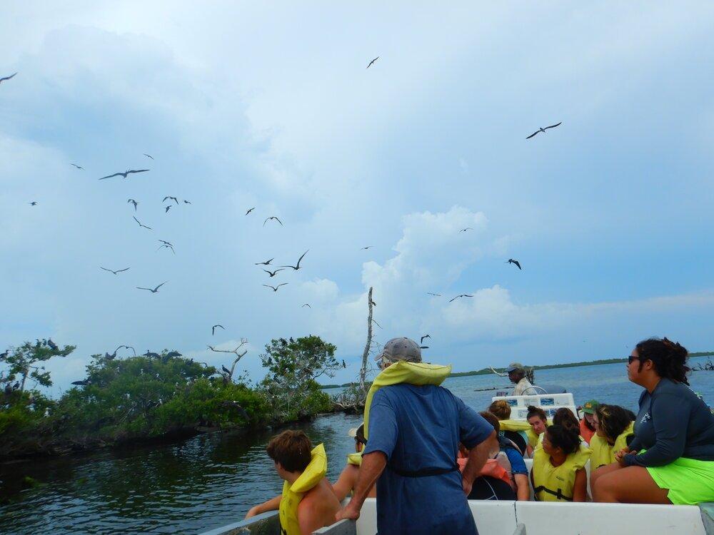 Tobacco Caye Marine Station Group at Mangroves